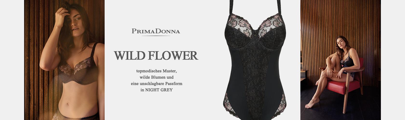 Slideshow WILD FLOWER NGR 01.11.